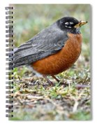 An American Robin With Muddy Beak Spiral Notebook