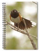 An Angry Towhee Spiral Notebook