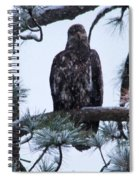 An Eagle Gazing Through Snowfall Spiral Notebook