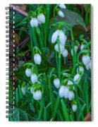 An Early Spring Spiral Notebook