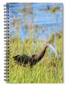 An Ibis In The Grass Spiral Notebook