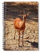 An Innocence.. Spiral Notebook
