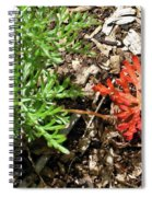An Oddity Of Nature Spiral Notebook