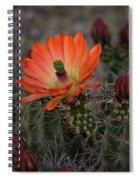 An Orange Beauty Of A Hedgehog  Spiral Notebook
