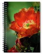 An Orange Dream  Spiral Notebook