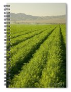 An Organic Carrot Field Spiral Notebook