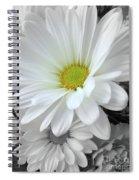 An Outstanding Daisy Spiral Notebook