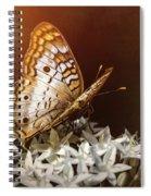 Anartia Jatrophae - White Peacock Butterfly  Spiral Notebook