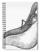 Anatomy: Liver Spiral Notebook
