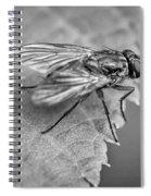 Anatomy Of A Pest - Bw Spiral Notebook