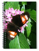 Anchored Down - Butterfly Spiral Notebook
