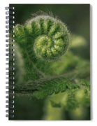 Ancient Forest Spiral Notebook