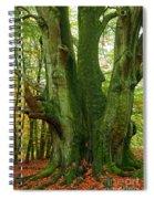 Ancient German Oak Trees In Sababurg Spiral Notebook