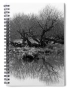 Ancient Pollard Trees Spiral Notebook
