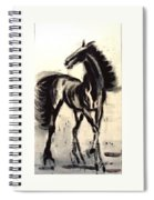 Andalusian Colt Spiral Notebook