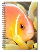Anemone, Close-up Spiral Notebook