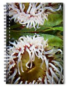 Anenome Reflection Spiral Notebook