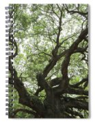 Angel Oak Branches Spiral Notebook