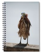 Angry Bird  Spiral Notebook