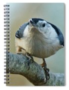 Angry White Breasted Nuthatch Spiral Notebook