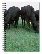 Angus Cattle Spiral Notebook