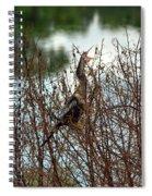Anhinga Calling Spiral Notebook