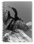 Anhinga On Lake Spiral Notebook