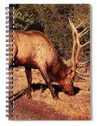 Animal - Elk -  An Elk Eating Spiral Notebook