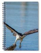 Animal - Bird - Osprey Catching A Fish Spiral Notebook