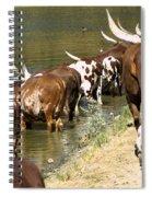 Ankole-watusi Cattle Spiral Notebook