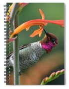 Anna's Hummingbird 1 Spiral Notebook