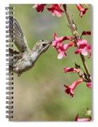 Anna's Hummingbird And The Penstemon  Spiral Notebook