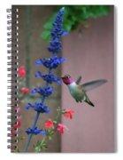 Anna's Hummingbird Feasting At Blue Salvia Spiral Notebook