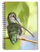 Anna's Hummingbird - Preening Spiral Notebook