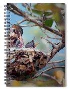Anna's Hummingbirds Spiral Notebook