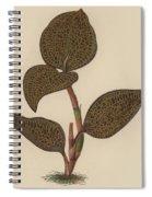 Anoectochilus Setaceus, Aurea Spiral Notebook