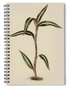 Anoectochilus Striatus Spiral Notebook