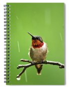 Another Rainy Day Hummingbird Spiral Notebook
