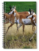 Antelope 1 Spiral Notebook