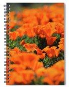 Antelope Valley California Poppies Spiral Notebook