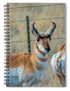 Antelopes Spiral Notebook