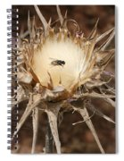 Antithesis - A Fly On A Thorn   Spiral Notebook