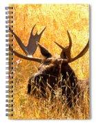 Antlers In The Golden Grass Spiral Notebook