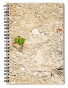 Ants At Oxtankah Spiral Notebook