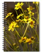 Anza Borrego Desert Sunflowers 1 Spiral Notebook