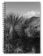 Anza-borrego Yuccas Spiral Notebook