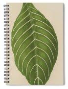 Aphelandra Leopoldii  Spiral Notebook