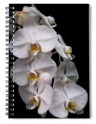 Aphrodite - White Orchid Spiral Notebook