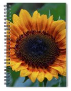 Apollo's Ring After The Rain Spiral Notebook