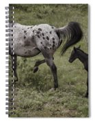Appaloosa And Baby Spiral Notebook